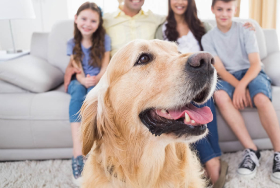 El saludable hábito de tener una mascota